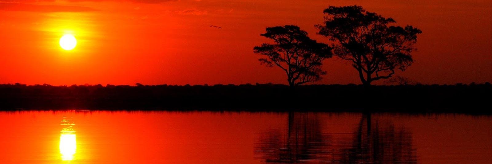 Pantanal Brazilië